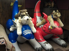 IMAG0425 (aaronwhipya) Tags: blue red animals husky wolf dragon aaron rubber plush inflatable latex inflate inflation plushes fursuit guilmon 8181 aaron8181