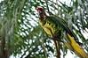 Bird (Firdi Basri) Tags: bird burung kakaktua