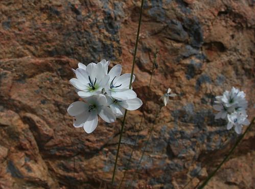 Exotic flora at Nigretta Falls  Dec.2013