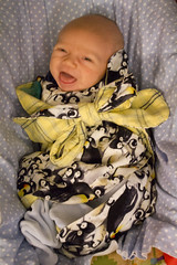 Happy baby (quinn.anya) Tags: baby happy penguins sam swaddled sotd kotd34