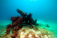 Wrecks in Carlile Bay (b.campbell65) Tags: ocean park travel blue sea fish tourism beach nature water animal coral boats outdoors island marine colorful paradise underwater ships scenic scuba diving tropical barbados caribbean sponges antilles carlilebay