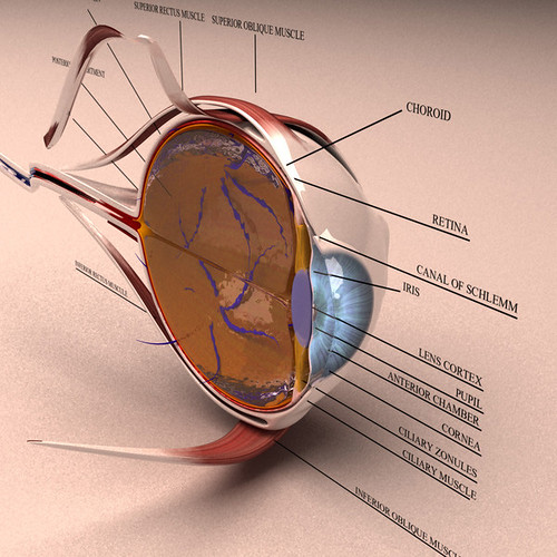 anatomy_section_eye_model
