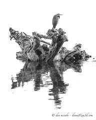 Reflection of Heron and Driftwood (zen3d ) Tags: bw reflection bird beach heron landscape driftwood pugetsound reflectsobsessions