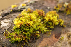 Moss Garden (gripspix (OFF)) Tags: nature moss natur bark rinde moos appletree apfelbaum 20140110