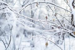 IMG_1370 (Choo_Choo_train) Tags: winter white snow cold nature canon season landscape 50mm russia moscow 6d 5012l тимирязевскийлес ilobsterit