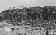 minas gerais (Rodrigo Louro) Tags: minasgerais devastação rodrigolouro