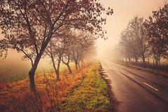 Lost on the Road (ill-padrino www.matthiashaker.com) Tags: road street trees mist field fog landscape countryside alley mood foggy melancholy