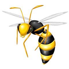 vespa (n_tsuyoshi) Tags: italy vespa giallo ape miele insetto volare nettare allergia alveare arnia insidia velenoso puntura