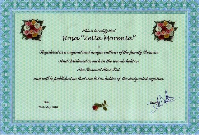 zetta_rose