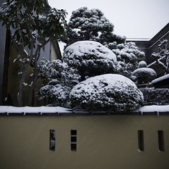 Frosted Pruned Trees, Kasai, February 08 2014 Blizzard (jacob schere [in the 03 strategically planning]) Tags: winter urban snow tree ice japan wall digital garden tokyo jacob 4 snowstorm communication gr lucid blizzard iv ricoh whiteout frosted kasai m2c schere  dgr jacobschere lucidcommunication