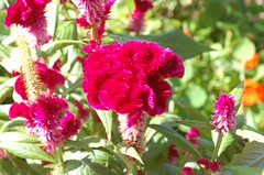 "Flowers at Delano Garden <a style=""margin-left:10px; font-size:0.8em;"" href=""http://www.flickr.com/photos/91915217@N00/12450218093/"" target=""_blank"">@flickr</a>"