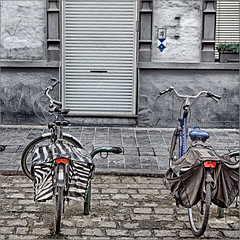 City-zebra and city-mule, resting (Luc B - PhLB) Tags: city animals bicycle ezel zebra bicyclette fahrrad mule fiets stadsdieren damesfiets muilezel pakezel herenfiets stadsdier lastdier lastfiets