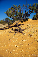 The Pinnacles - 3 (JamieCN) Tags: life tree art nature canon miniature bush sand australia adventure dirt perth bonsai wa outback cervantes pinaccles 5dmkii