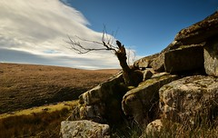 LONESOME TREE OVER THE EAST DART (russell D7000 (D80)) Tags: park blue england sky cloud tree river rocks east formation devon national valley grasses lonely lichen sunlit dartmoor dart mosses