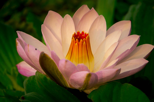 Water-Lily-08211.jpg