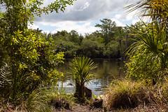 (lemank) Tags: big national cypress preserve bigcypressnationalpreserve deeplake