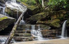 Somersby Falls-8 (TMCiantar) Tags: waterfalls water waterfall slowexposure longexposure local central coast nsw australia somersby rain rocks rainforest trees bush nature happy place slippery landscape