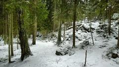 Uutela (timo_w2s) Tags: vuosaari aurinkolahti uutela helsinki finland winter snow forest firtrees