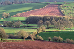 Mid Devon fields near Bradninch