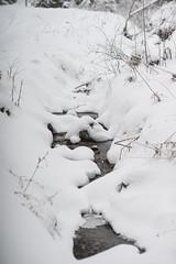 little creek (SpotShot) Tags: todtnau badenwürttemberg deutschland sony a7 ilce7 sonya7 minolta 85mm mc rokkor f17 mcii 85 minoltamcrokkor85mmf17 cold kalt snow schnee white weis back creek