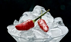 Takin' the heat out of the chilis (flowrwolf) Tags: smileonsundayiceday smileonsunday takintheheatoutofthechilis iceday 57stilllifefor117in2017 117in2017 117picturesin2017 stilllifewithicecubesandchilies ice glass martiniglass chilisandice icecubes iceblocks chili chilis hotchilis blackbackground hot cold hotandcold indoor indoors inside naturallight black red white bright catchycolours flowrwolf
