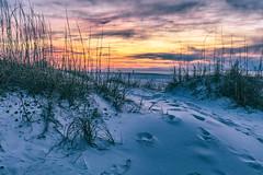 Alabama Sunrise and Dunes (johnmcgrawphotography) Tags: alabama alabamasunrise beachsunrise canon canon5dsr gulfshores gulfshoresalabama gulfofmexico gulfofmexicobeach gulfofmexicoocean johnmcgrawphotography ocean orangebeach photography sunrise sunrisebeach travel travelphotography