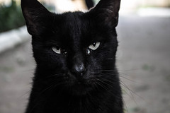 bad (Ruadh Sionnach) Tags: cat kittie pet fur black macro animal witch witchcraft pagan paganism