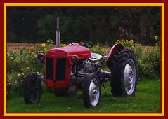 AH62_1190 (der_andyrandy) Tags: trecker schlepper feld oldtimer farm grün rot