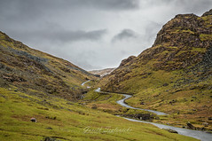 Winding through the Lake District (gseglenieks) Tags: lakesdistrict roadtrip drive explore adventure uk england winter hills mountains hill mountain sheep animals animal grass green nature landscape wildlife rocks rocky outdoor escape cloud cloudy wet rain wanderlust local nofilter hdr