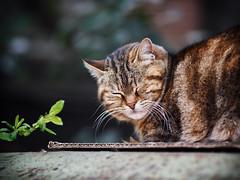 Street cat 184 (Yalitas) Tags: cat cats кот кошка котка kedi chat feline kat katze katzen kot kotka pet felino kottur katte kass kitty gato kocka gatta katzchen canon streetcat sleepingcat