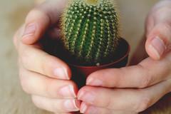 130/365 cactus (yanakv) Tags: cactus 50mmf18stm 50mm 365days 365dias canon eos1200d hand manos