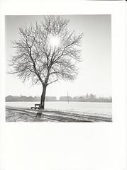 Anthering im Winter (cardijo) Tags: landscape tree sun sonne analog print ilford multigrade rolleiflex fp4 darkroom