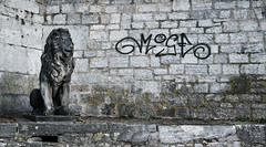 streetart (blaendwaerk) Tags: canon eos 650d 1750mm fall herbst würzburg stein stone grey grau streetart löwe lion street wall wand