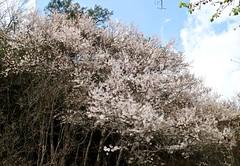 IMG_2881 (JBBTaipei) Tags: taiwan wulingfarm