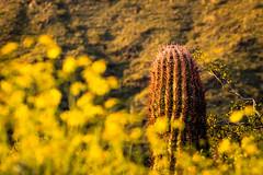 DSC_2662.jpg (RiverBum - MN) Tags: whitetank arizona phoenix mountains