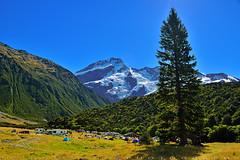 The park is popular for mountaineering (T Ξ Ξ J Ξ) Tags: newzealand aoraki mountcook d750 nikkor teeje nikon2470mmf28 day mountain cook mountaineering