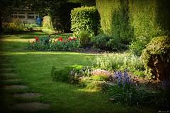 Jardin d'Avril (florence.V) Tags: france hautsdefrance nord 59 lesweppes salomé jardin garden fleur flower printemps photoshop texture