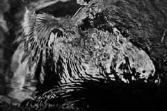 Surface Tension (Steve Vallis) Tags: england forestofdean water monochrome shapes ripples wings surface tension