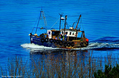 Scotland Greenock returning to port a wee fishing trawler 26 March 2017 by Anne MacKay (Anne MacKay images of interest & wonder) Tags: scotland river clyde greenock small wee fishing trawler xs1 26 march 2017 picture by anne mackay