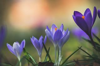 Springin around