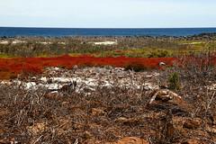 Galapagos Wilderness (Mahmoud R Maheri) Tags: landscape galapagos bush wild wildlife sky birdsanctury pacificocean seymourisland ocean
