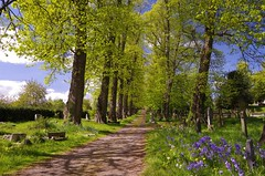 Spring path (Sundornvic) Tags: path road trees green blue sun shine shrewsburycemetery longden coleham sky clouds grass graves burial