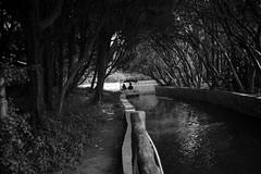 20170427-DSC02409 (New unicorn) Tags: landscape beautiful blackwhite boat water refelction tranquility tree summicron sunset sunlight sundown sky bw scenery scene peaceful people streetphotography