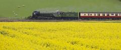 Green and Yellow 2 (ianwyliephoto) Tags: tornado 60163 steamengine steamtrain loco locomotive corbridge northumberland tynevalley tynedale ukrailtours train rapeseedoil yellow green