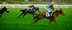 GAF photo-7.jpg (GAF photo) Tags: auteuil courseshippiques