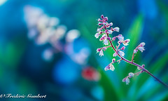 Spring Colors of Morning (frederic.gombert) Tags: spring light color colors sun sunlight flower flowers macro nikon