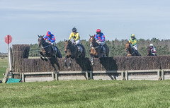 Up and away (David Feuerhelm) Tags: outdoor colour racecourse nikkor horseracing pointtopoint animals horses jockeys movement jumping action horseheath cambridgeshire england nikon d7100