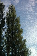 DSC_0666 (Les photos du chaudron) Tags: canada favoris lieu vancouver
