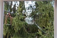Birdprint (jcdriftwood) Tags: bird print birdprint window glass collision strike stop mark barrier crash