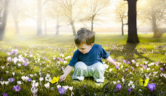 Young Boy Picking Dandelion Flowers (Krome Studio) Tags: child nature environment grass picking dandelion flower flowers spring green beautiful kid boy background people pick summer toddler plant caucasian kids cute happiness growth yellow meadow children happy person space portrait outdoors one day adorable dandelions young outside weeds taraxacum asteraceae down looking bending single park beauty field canada